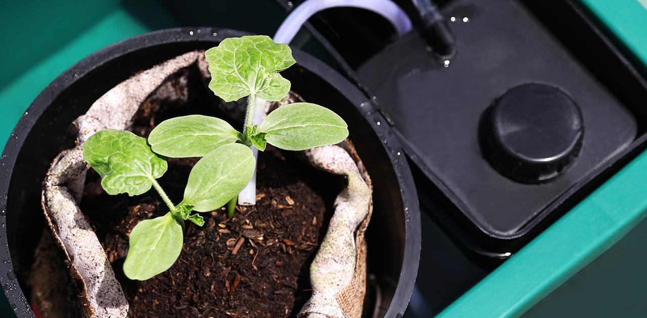 地味にスゴイ!自動栽培システムSoBiCが世界を救う?!
